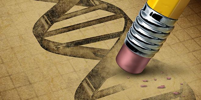 Modification Génétique
